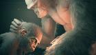 Ancestors: The Humankind Odyssey -arvostelu
